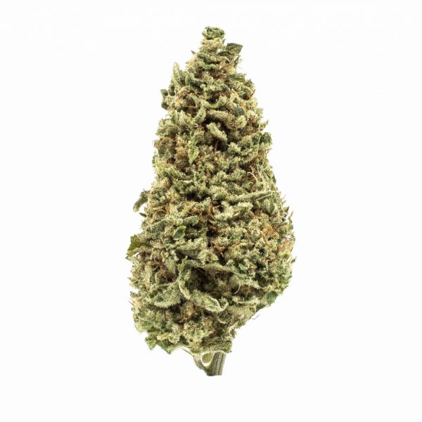 Mac & Cheese - Limited Time Only Recreational & Medical Strain at Maggie's Farm