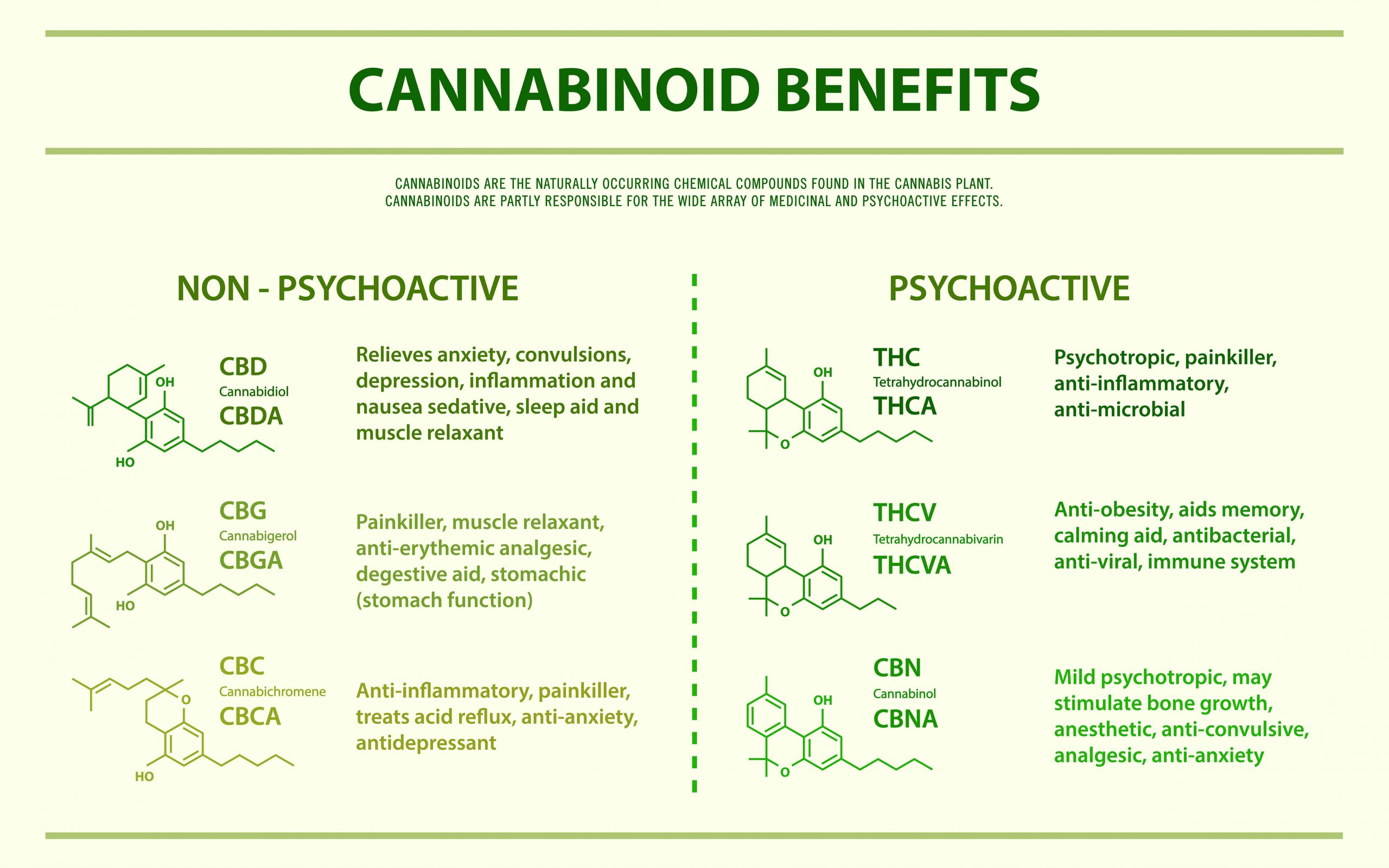 The Benefits of Cannabinoids Infographic